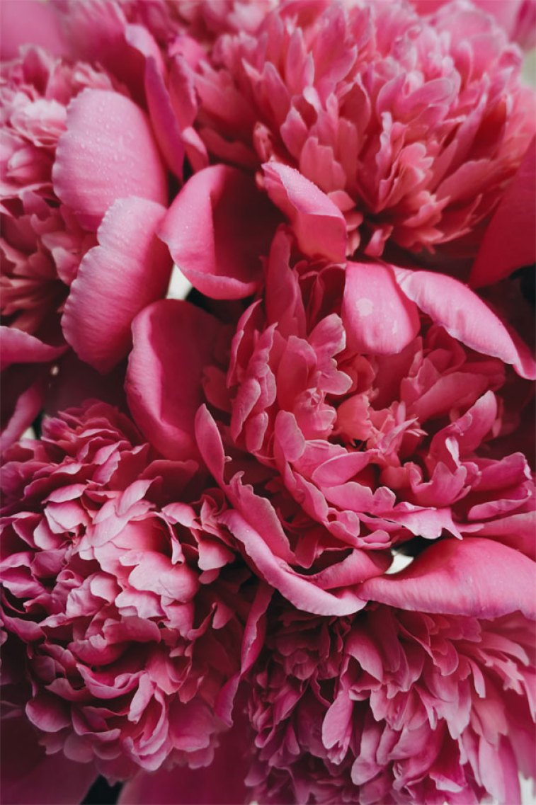 Pretty pink flowers #wallpaper #iphone