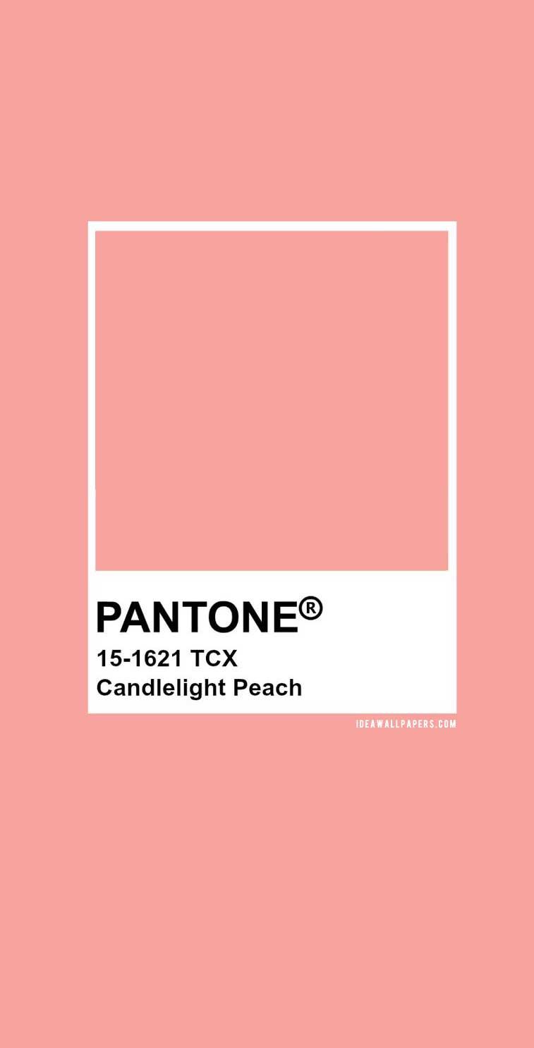 Pantone Candlelight Peach : Pantone 15-1621 #color #pantone #peach