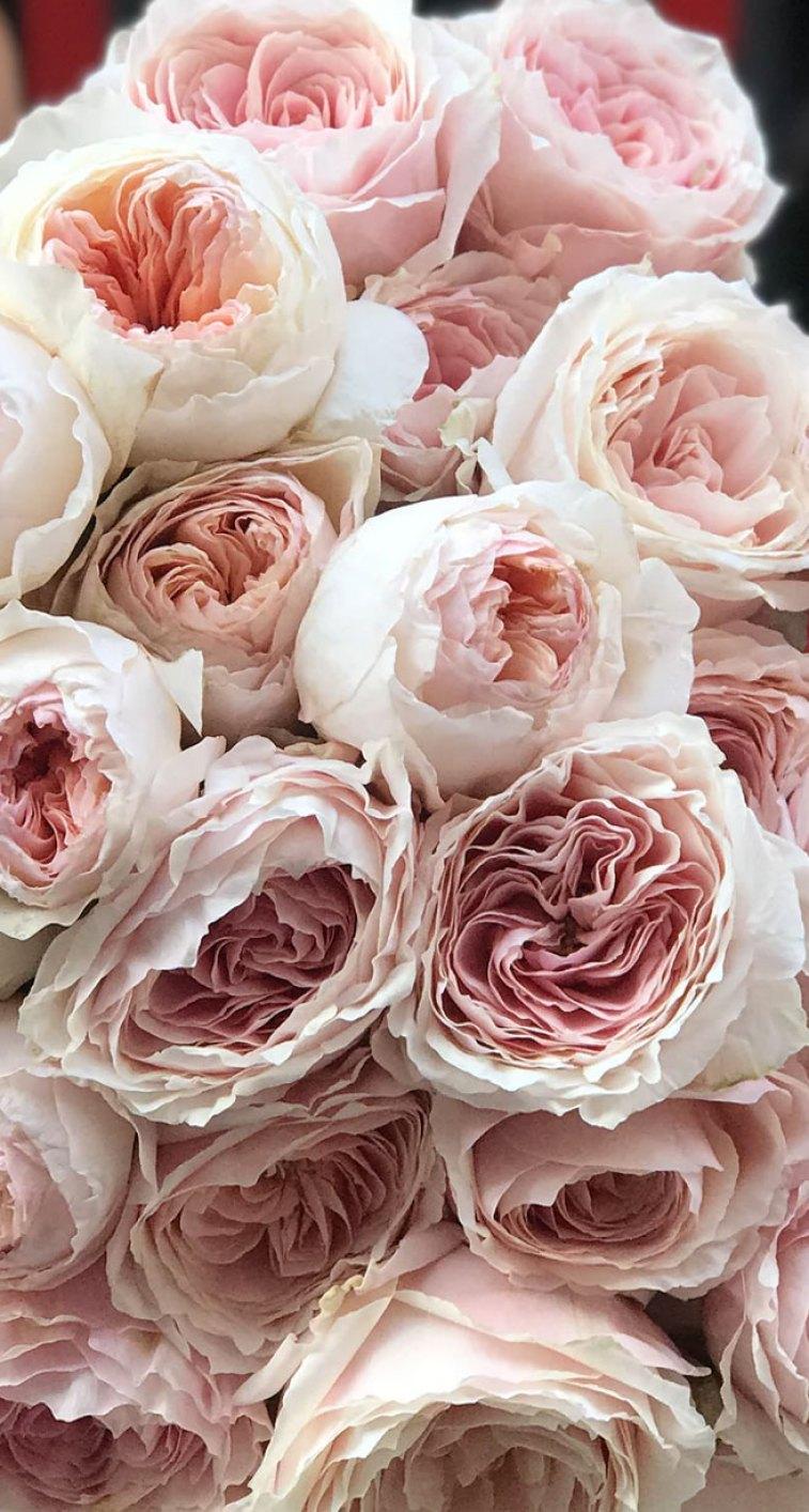 Gorgeous blush peonies , David Austin Roses #flowers