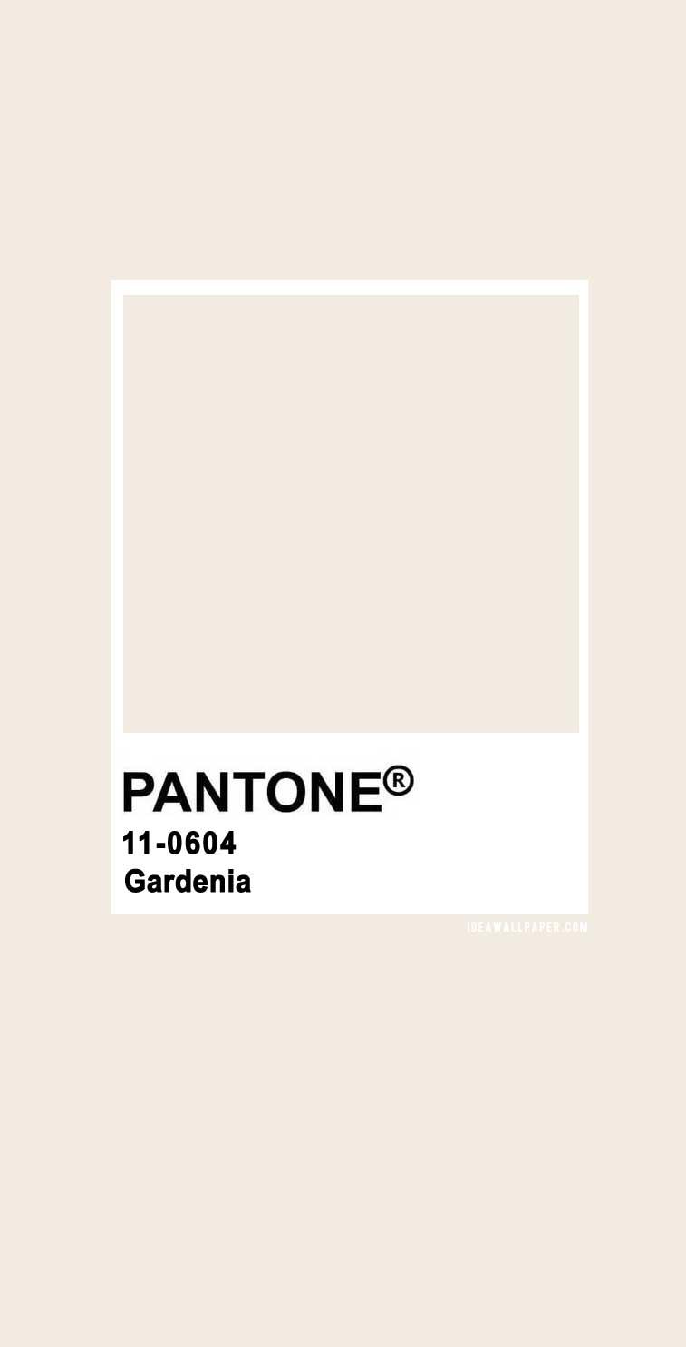 100 Pantone Color Palettes : Pantone Gardenia 11-0604 #pantone #color #pantonegardenia #beige