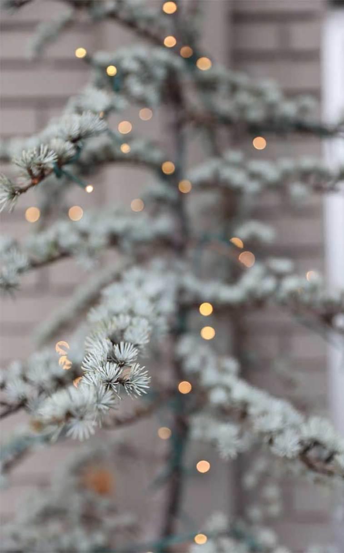 Christmas tree with fairy lights #winter #christmas