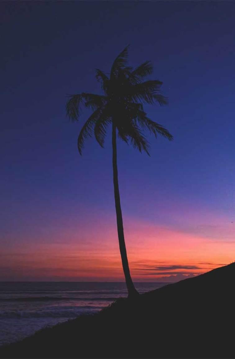 Coconet tree indigo and orange sky, evening sky #sky #wallpaper