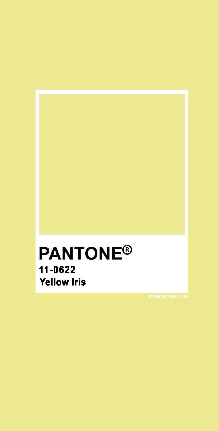 100 Pantone Color Palettes : Pantone Yellow Iris 11-0622  #pantone #color  #yellowiris #yellow