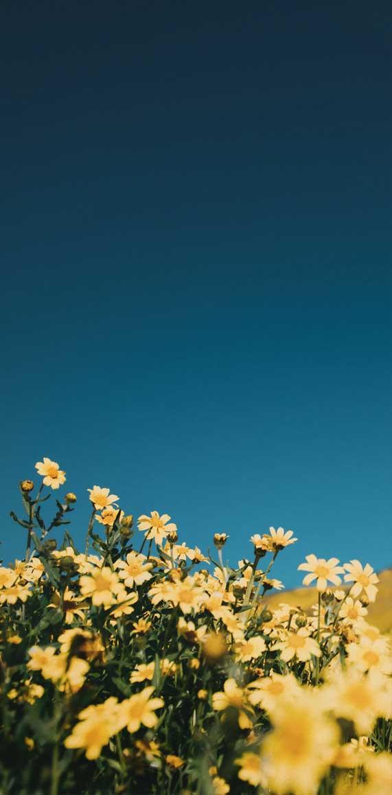 wild flower wallpaper, wild flower iphone wallpaper, green leaf wallpaper ideas, tropical flower wallpaper , wild flowers wallpaper, flowers wallpaper iphone, flower iphone wallpaper, iphone wallpaper flower #iphonewallpaper #wildflowers #floweriphonewallpaper