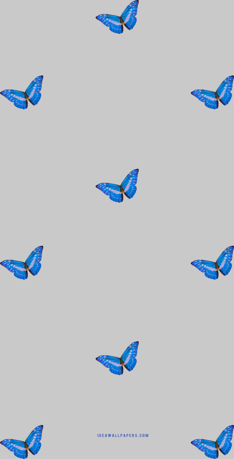 Butterfly On Grey Background Idea Wallpapers Iphone Wallpapers Color Schemes