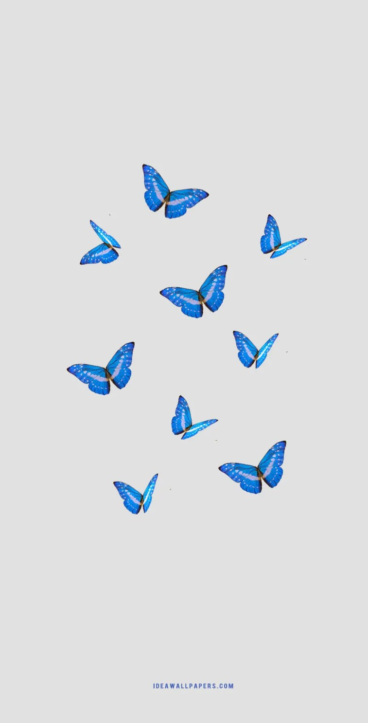 Butterfly Iphone Background Idea Wallpapers Iphone Wallpapers Color Schemes