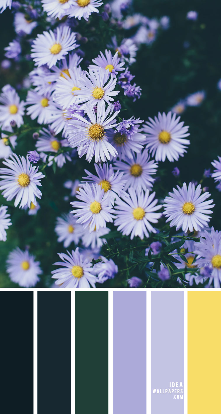 lavender color scheme, lavender yellow and blue color scheme, lavender and yellow color combo