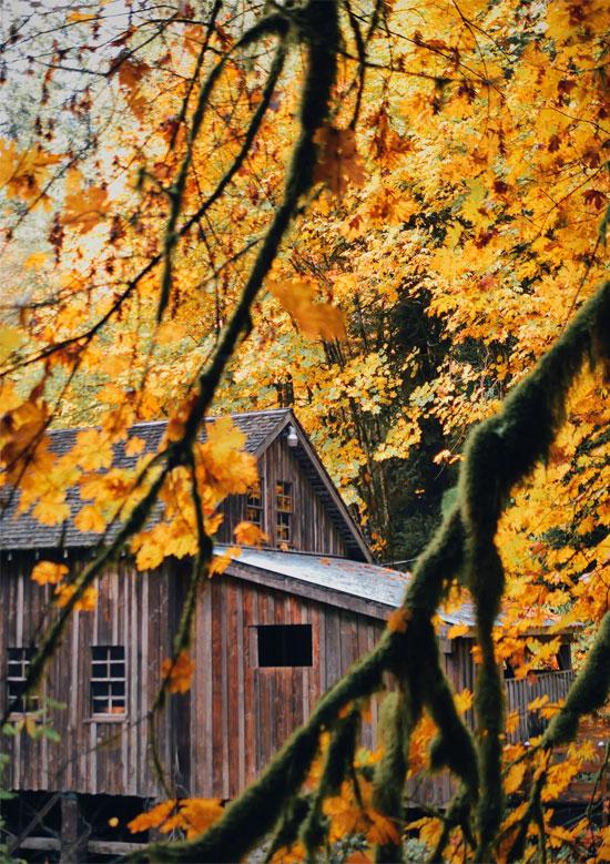 autumn aesthetic 1