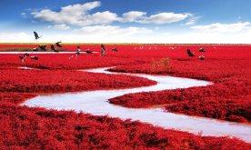 Red Seabeach de Chine