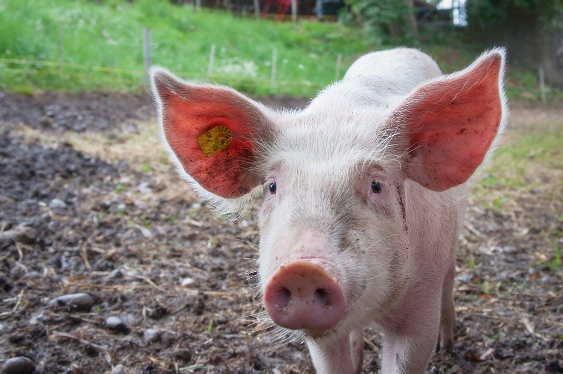 grise legen