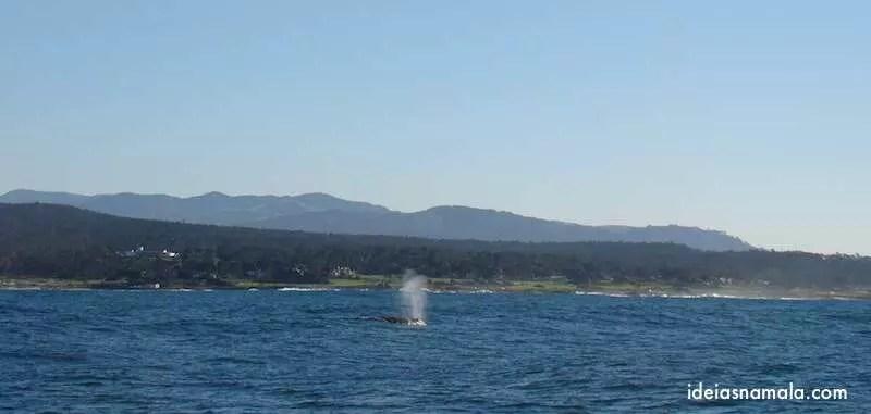 Baleia em Monterey
