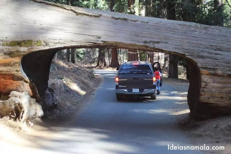 Tunnel Log - Sequoias National Park