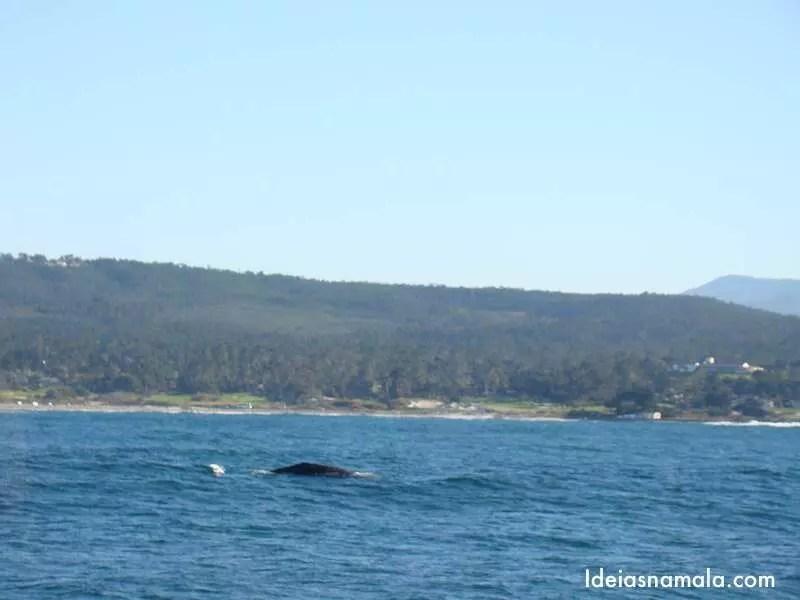 Baleia   Monterey