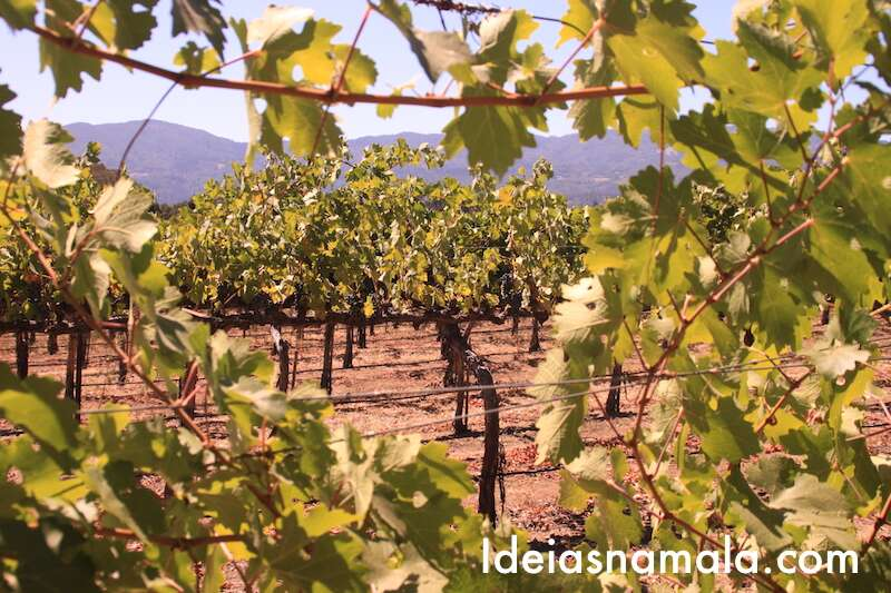 Napa Valley - Califórnia