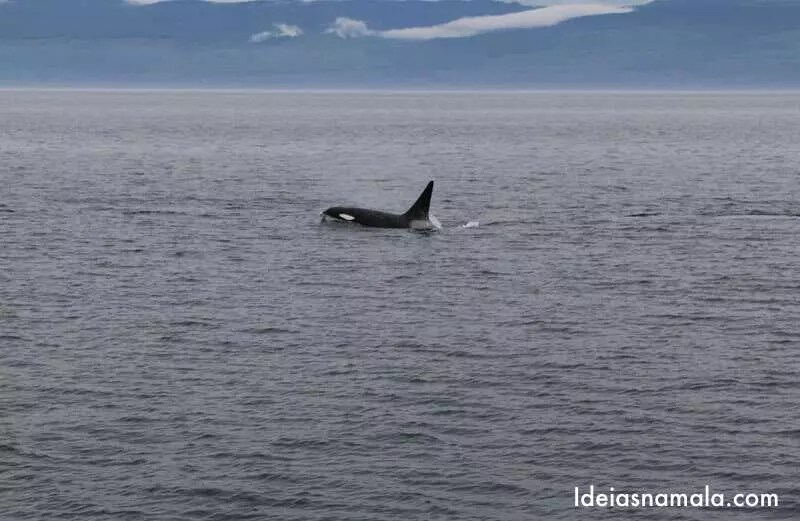 Tour para ver baleias no Canadá