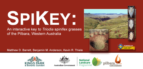 SPIKEY: An interactive key to Triodia spinifex grasses of the Pilbara, Western Australia