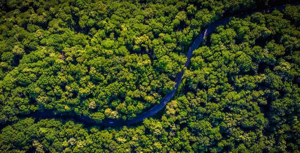 Rainforest with river meandering through