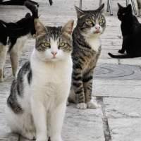 Απόλυτα ικανοποιημένες οι γάτες της χώρας από τη συνέχιση της απεργίας των συμβασιούχων
