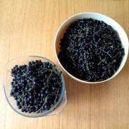 blackcurrants_2-300x300