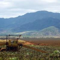 Strawber....Pineapple Fields Forever