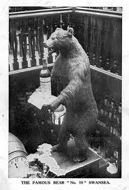 The Bear from the No10 Pub Union Street