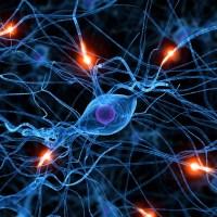 Ho ucciso: una questione neuroanatomica?