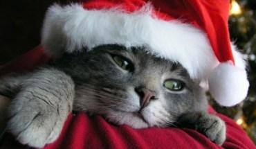 Βρήκαν ανήμερα Χριστουγέννων τη γάτα που είχαν χάσει πριν από 7 χρόνια