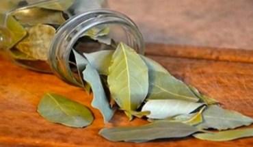 φύλλα δάφνης 5