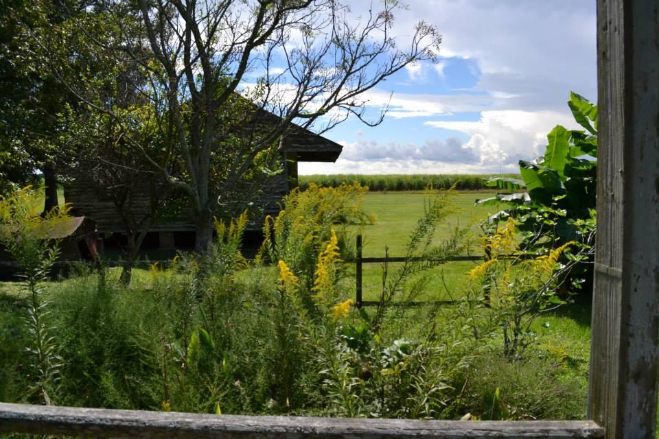 a-louisiana-plantation