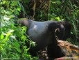 Uganda_00043 SML