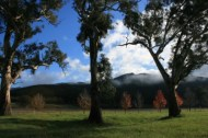 Valley of a Thousand Hills - Strath Creek Region Country Victoria - Aust. 2010 Photo 3 Photographed by Abstract Artist: Karen Robinson NB: All images are protected by copyright laws!