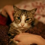 How to perform a home health check for your cat – The Conscious Cat