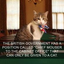 cat-facts-14-593ffab46c2fb__700
