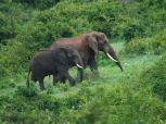 two_elephants_dream-of-africa_tours_safari_tanzania_manyara