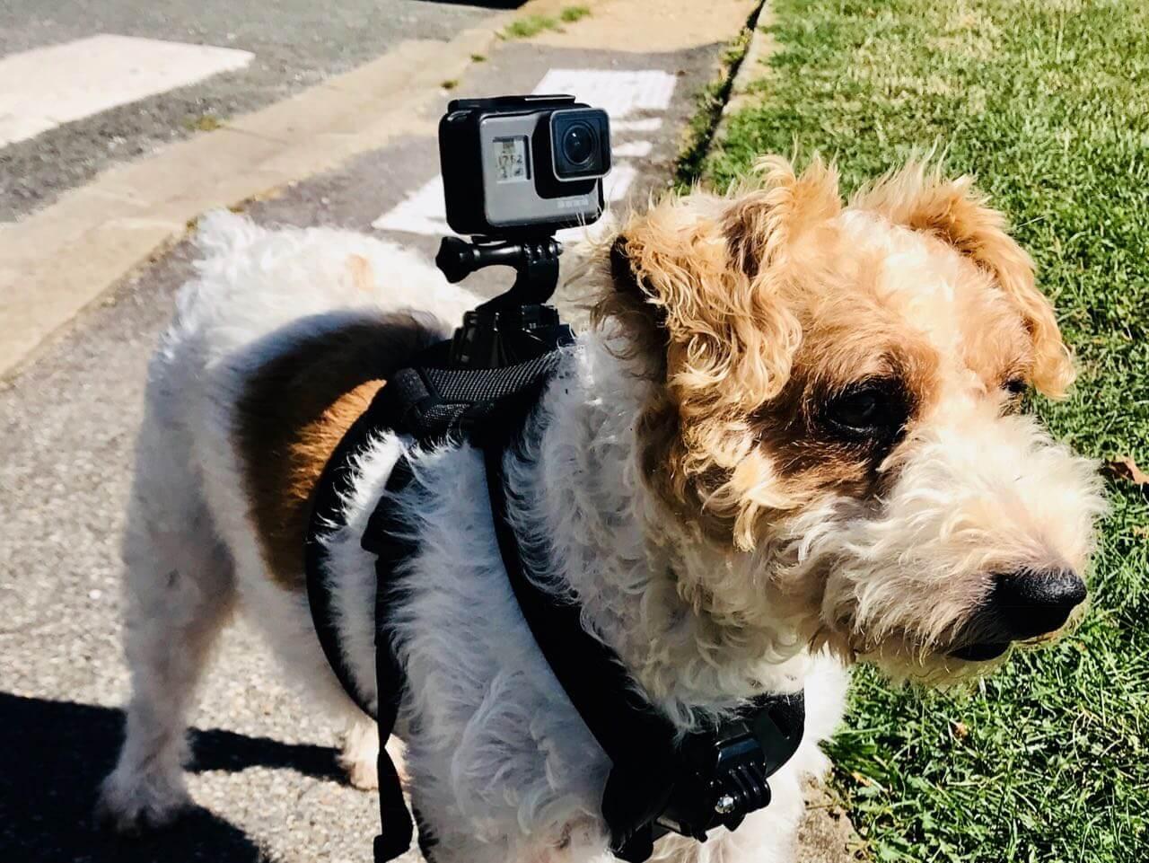 26c3db85a48 SETUP  Caméra GOPRO les Accessoires indispensables pour actioncam ...