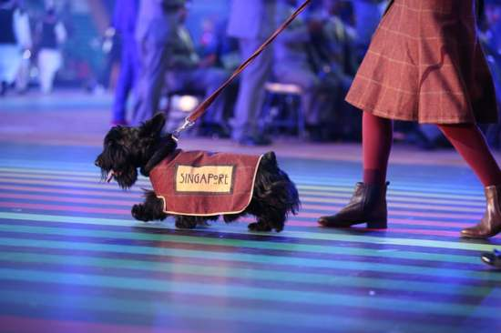 The Scottish Terrier accompanying the Singapore team at the opening ceremony. EMPICS Sport