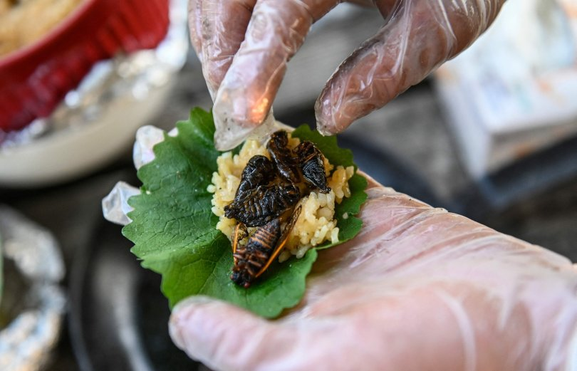 Fried cicadas are rolled into a sushi roll by Chef Bun Lai at Fort Totten Park in Washington, U.S., May 23, 2021. (AFP Photo)