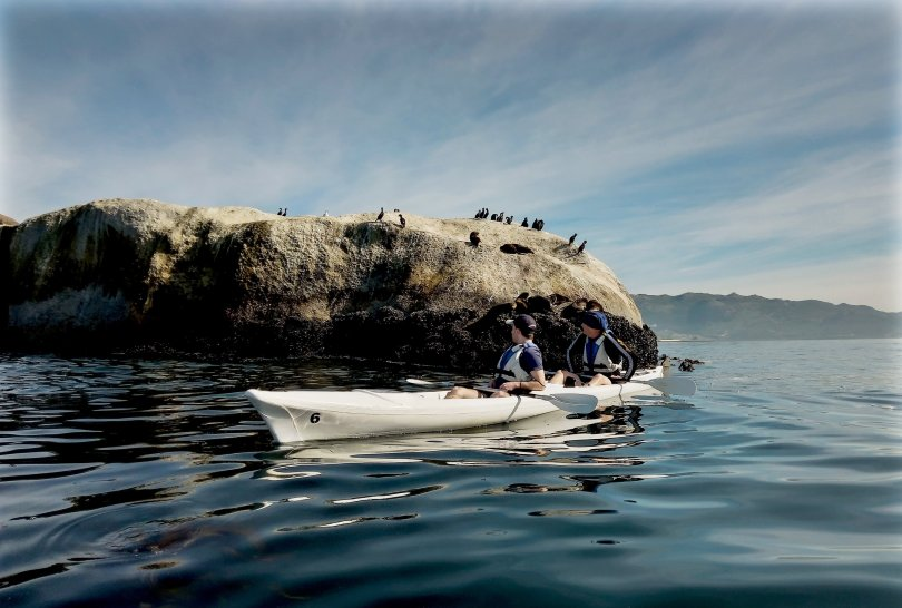 The seabirds say hello: the Cape Peninsula is easy to explore from the water. (Christian Selz/dpa Photo)