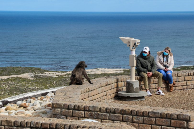 The view at the cape is beautiful, but the baboons are notoriously cheeky. (Christian Selz/dpa Photo)