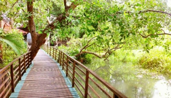 Tempat Wisata di Jakarta Salah Satunya Hutan Muara Angke