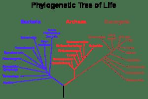 450px-Phylogenetic_tree