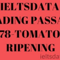 IELTSDATA READING PASSAGE 78-TOMATO RIPENING