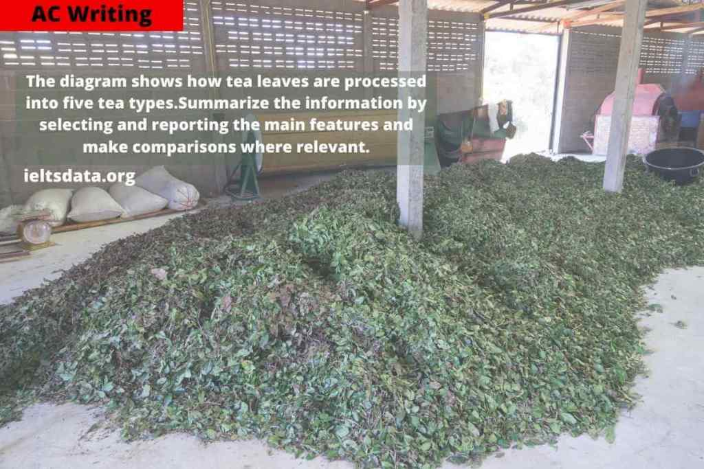 How Tea Leaves Are Processed Into Five Tea Types- AC Writing
