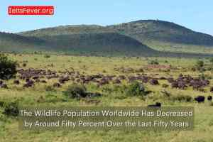 The Wildlife Population Worldwide Has Decreased by Around Fifty Percent Over the Last Fifty Years
