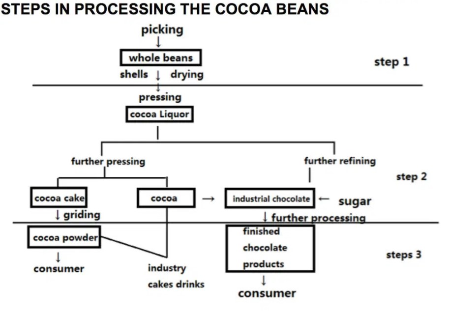 The diagram below shows the steps of processing cocoa beans