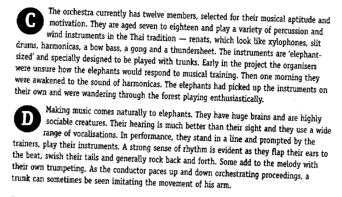 The Elephant Orchestra 2