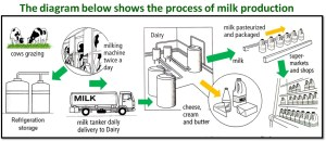 IELTS Writing: Task 1: Flow Charts and Processes: A Step