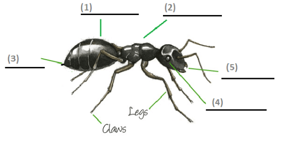 reading practice  about ants