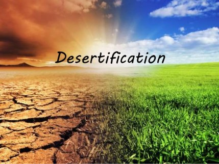 Desertification Reading Exercise & Useful Vocab
