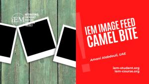iem image feed camel bite